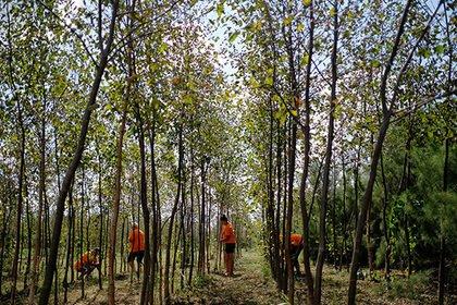 Photo of «Русал» посадит миллион деревьев, но не в Николаеве