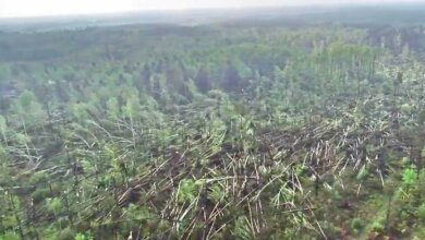 В Украине смерч повалил 100 гектаров леса (видео)   Корабелов.ИНФО