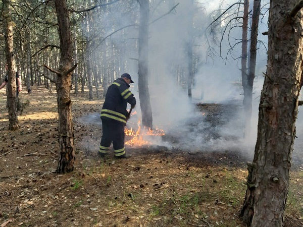 Photo of Неизвестные подожгли Балабановский лес – спасатели оперативно погасили пожар
