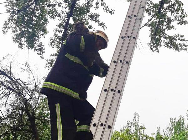 Photo of Спасатели в Корабельном районе помогли коту спуститься с дерева