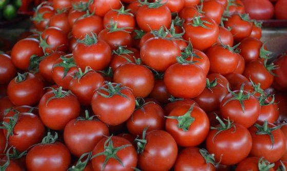 Photo of Зараженные помидоры попали и на Николаевщину. Из Турции в Украину завезли томаты с вредителем