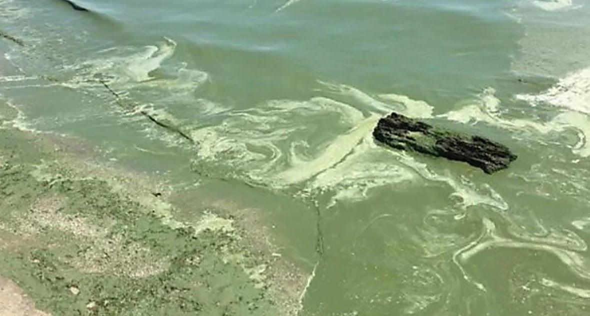 Photo of Зеленая жижа на пляжах Николаевщины и Одессы: экологи не советуют купаться в море (видео)