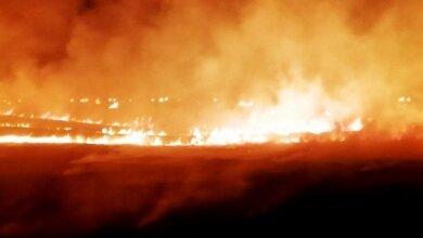 Балабановский лес подожгли сразу в трех местах | Корабелов.ИНФО