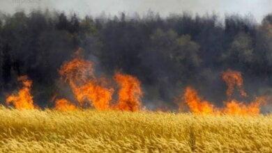 Майже 5 га полум'я: на території Галицинівської ОТГ горіла пшениця   Корабелов.ИНФО