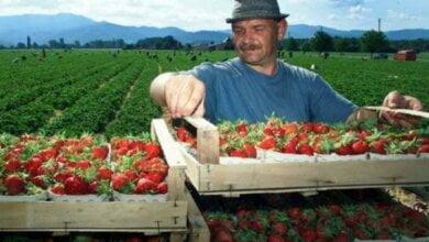 Photo of Почти каждый пятый украинец трудоспособного возраста работает за границей – Минфин