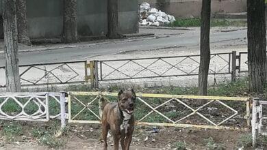 Photo of «Зачем заводить животное, если не можешь о нём позаботиться?!», — люди в Корабельном районе возмущены жестоким обращением с собакой