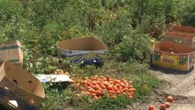 Убийство в Витовском районе из-за помидор: подробности (видео) | Корабелов.ИНФО