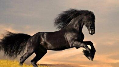 Появились подробности гибели под Харьковом девочки, привязанной веревкой к лошади | Корабелов.ИНФО