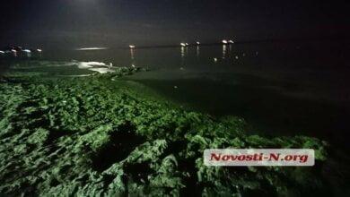 Пляж в Коблево позеленел от водорослей | Корабелов.ИНФО image 1