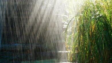 Кратковременные дожди и грозы: прогноз на выходные для Николаевской области | Корабелов.ИНФО