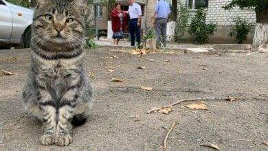 Дворовой кот из Корабельного района попал на фото с мэром Николаева и стал знаменит | Корабелов.ИНФО