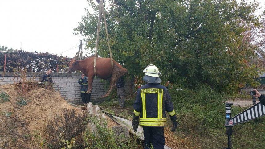 Photo of При помощи подъемного крана в Корабельном районе из ямы доставали корову