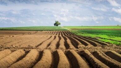 Photo of Кабмин доработал модель открытия рынка земли, предложив запретить ее продажу иностранцам до 2024 года