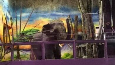 В Николаевский зоопарк привезли долгожданных азиатских слонов   Корабелов.ИНФО