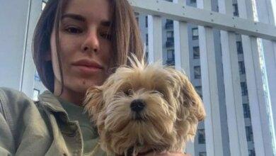 Жену николаевского губернатора из-за собаки выгнали из ресторана   Корабелов.ИНФО image 2