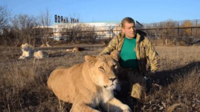 Бывший фанатик РФ в Крыму из-за помех в работе зоопарка угрожает убить зверей (Видео)   Корабелов.ИНФО