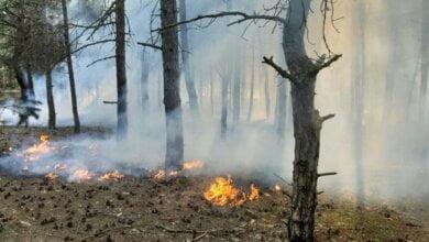 Photo of В Балабановском лесу горела хвойная подстилка
