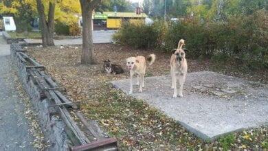 """собаки возле """"АТБ"""" в Корабельном районе"""