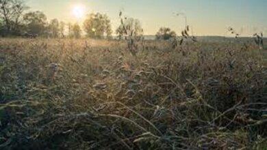 На выходные николаевцам обещают теплую погоду без осадков   Корабелов.ИНФО