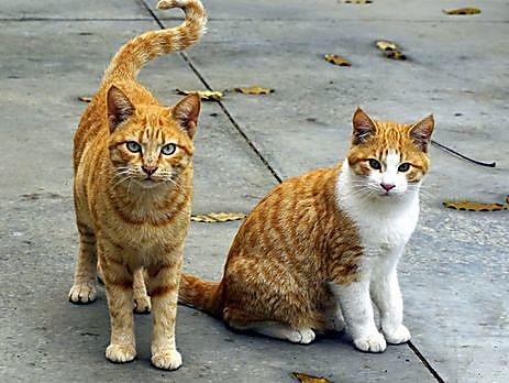 Photo of Депутаты Николаевского горсовета признали уличных котов частью экосистемы города