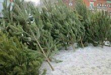 Photo of Средняя цена новогодней елки в Николаеве составит 69 гривен