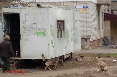 собаки и прием стеклотары в Корабельном районе
