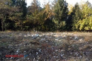 """мусор возле пляжа """"Чайка"""" (ноябрь 2019 г.)"""