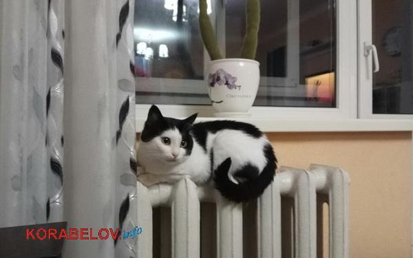 Photo of Вместо понижения тарифа на отопление, в Николаеве его подняли на 30%
