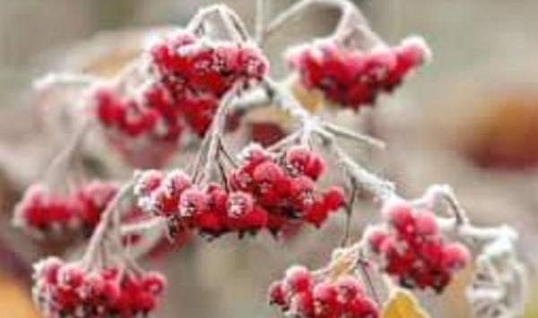 Photo of «Може статися новий рекорд мінімальної температури», – прогноз погоди у Миколаєві на завтра