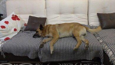 Photo of Неизвестный в Корабельном районе застрелил двух собак – полиция ищет стрелка
