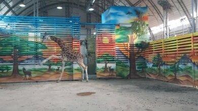 Появилось видео танцующего жирафа Нуру в Николаевском зоопарке | Корабелов.ИНФО