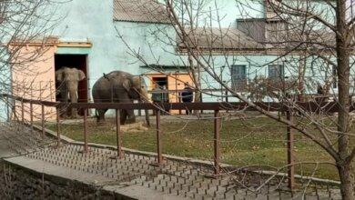 Слоны в николаевском зоопарке вышли на свою первую прогулку (видео) | Корабелов.ИНФО