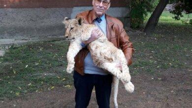 Photo of В Николаевском зоопарке не знают, куда девать новорожденных львят и тигрят