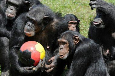 Николаевский зоопарк примет в дар для зверюшек разные мячи | Корабелов.ИНФО