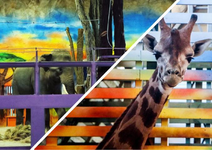 Photo of «Он любит играться и кидается вениками», — в Николаевском зоопарке рассказали о поведении новых обитателей (видео)