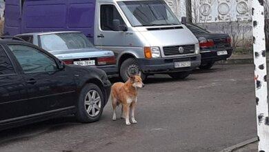 Photo of «Этот пёс постоянно кидается на детей и взрослых», — в Корабельном районе на женщину напала собака