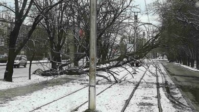 Photo of Упавшее на провода дерево заблокировало движение трамваев в Широкую Балку