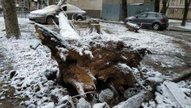 Photo of Из-за непогоды в Николаеве «массово» падают деревья, в том числе на дома и здания больницы. Одно из них разбило автомобиль (Фото)