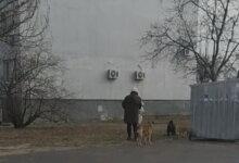 Photo of «Может, не нужно ждать, пока они кинутся на ребенка?!», — жительница Корабельного района о стае собак, обитающей возле детсада