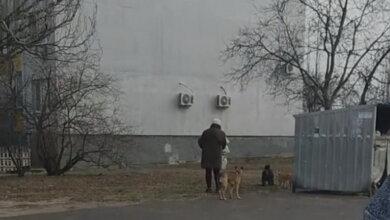 Photo of «Может, не нужно ждать, пока они кинутся на ребенка?!», – жительница Корабельного района о стае собак, обитающей возле детсада