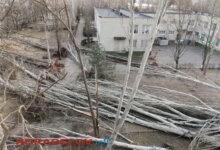 Photo of Больше всего деревьев от урагана попадало в Корабельном районе