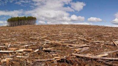 Photo of Официально: на Николаевщине вырубили в 10 раз больше леса, чем посадили