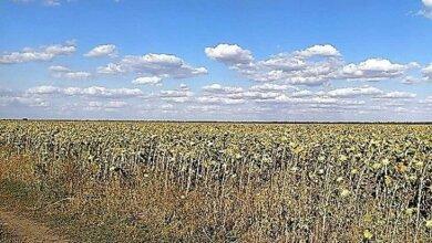 Фермер, самовольно засеявший землю на Витовщине, выплатил 600 тысяч ущерба и 2,6 млн грн налогов | Корабелов.ИНФО