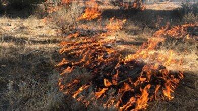 Кабмин предлагает повысить до 6000 грн штраф за поджог сухой травы | Корабелов.ИНФО