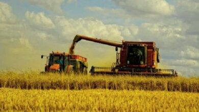Минэкономики прогнозирует, что урожай зерна в Украине из-за засухи и COVID-19 сократится на 20%   Корабелов.ИНФО