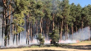 Поджоги: в Корабельном и Витовском районах горел лес | Корабелов.ИНФО
