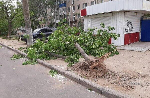 В Корабельном районе из-за ветра три дерева упали на детскую площадку | Корабелов.ИНФО image 3