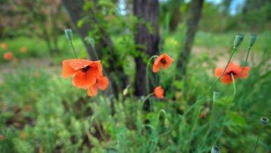 Photo of На Миколаївщини прогнозують короткочасний дощ з грозою