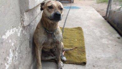 Photo of В Украине на аукционах продают собак, изъятых из-за долгов