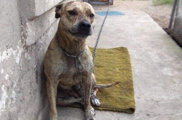 В Украине на аукционах продают собак, изъятых из-за долгов | Корабелов.ИНФО